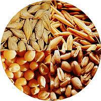 Менеджер по закупкам зерновых
